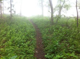trail foggy
